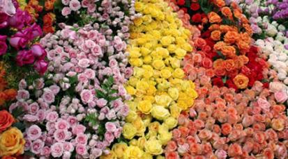 Apoyo al sector floricultor en Colombia