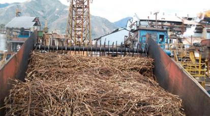 El Táchira volvería a aprovechar el cultivo de la caña de azúcar